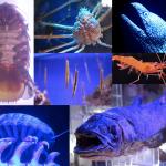 沼津港深海魚水族館 シーラカンスミュージアムに行って来た!ロマンだわぁ。